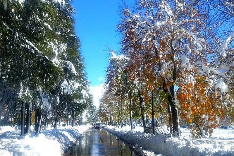 Color Schemes